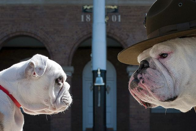 Even the Marine Corps mascot, Recruit Chesty, has to go through training.   (U.S. Marine Corps photo by Sgt. Dengrier Baez)