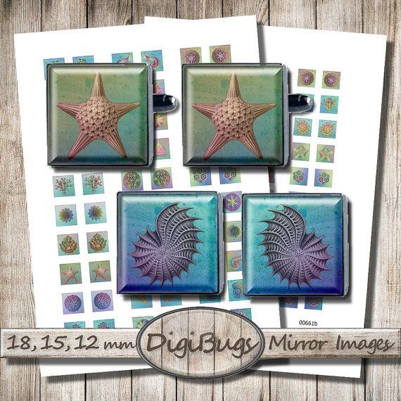 Sea Life, Digital Collage Sheet, 12 mm, 15 mm, 18 mm Squares, Printable Nautical Images, Sea Shells Corals, Ernst Haeckel Images, b1