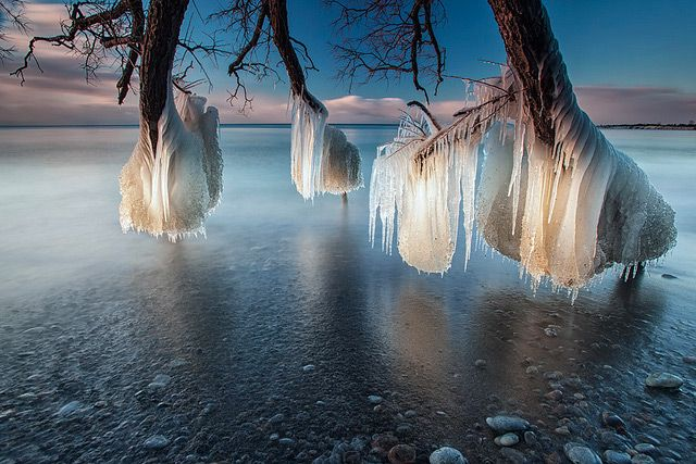 Frozen Trees on the Shores of Lake Ontario