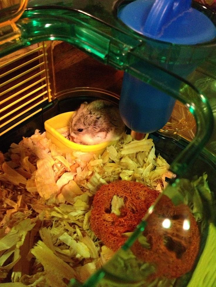 18 Cm Kuk Hamster Free - Marry66, Ålder:[MEMRES-2]