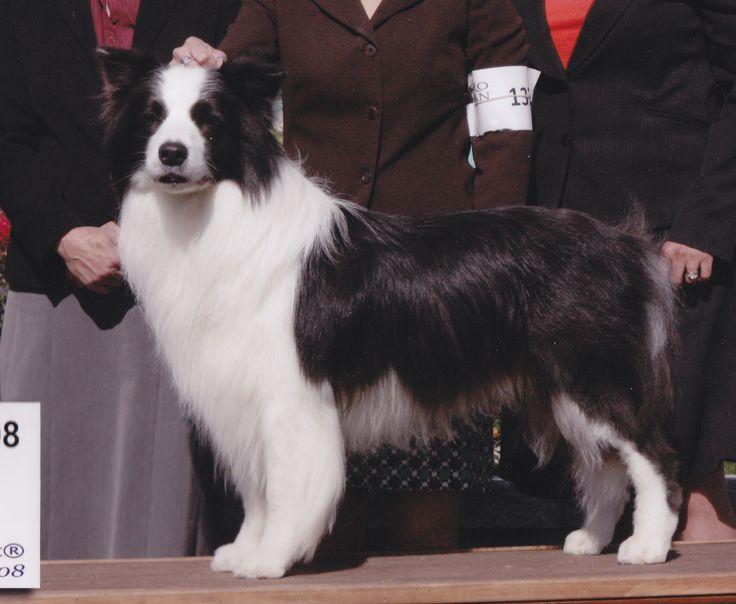50 Names for Dogs With White Feet | Fluffy dogs, Dogs ...