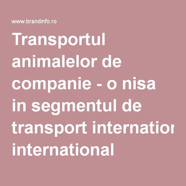 Transportul animalelor de companie - o nisa in segmentul de transport international