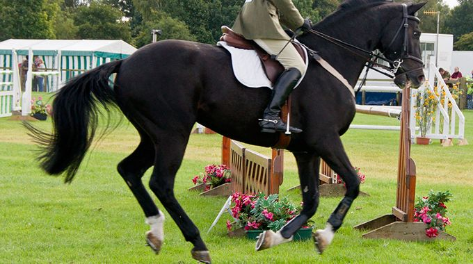 Tips For Riding And Training A Hot Horse