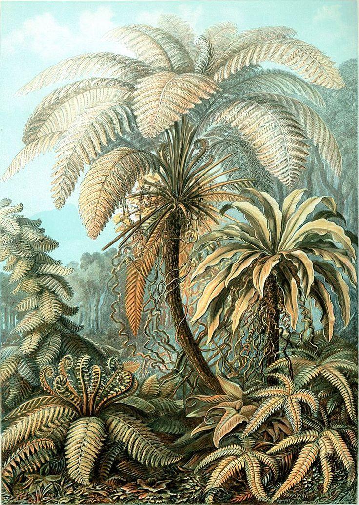 Haeckel Filicinae 92 - Kunstformen der Natur - Wikimedia Commons