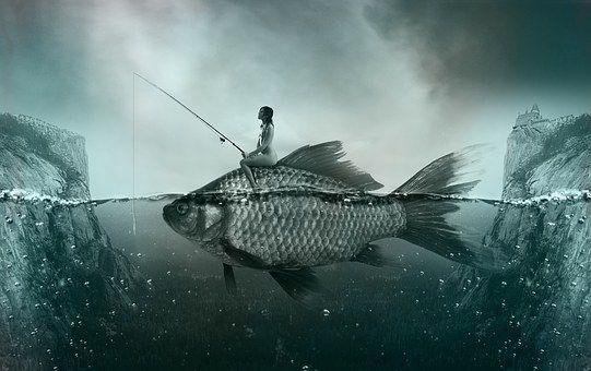Pescado, Peces, Lago, Fischer
