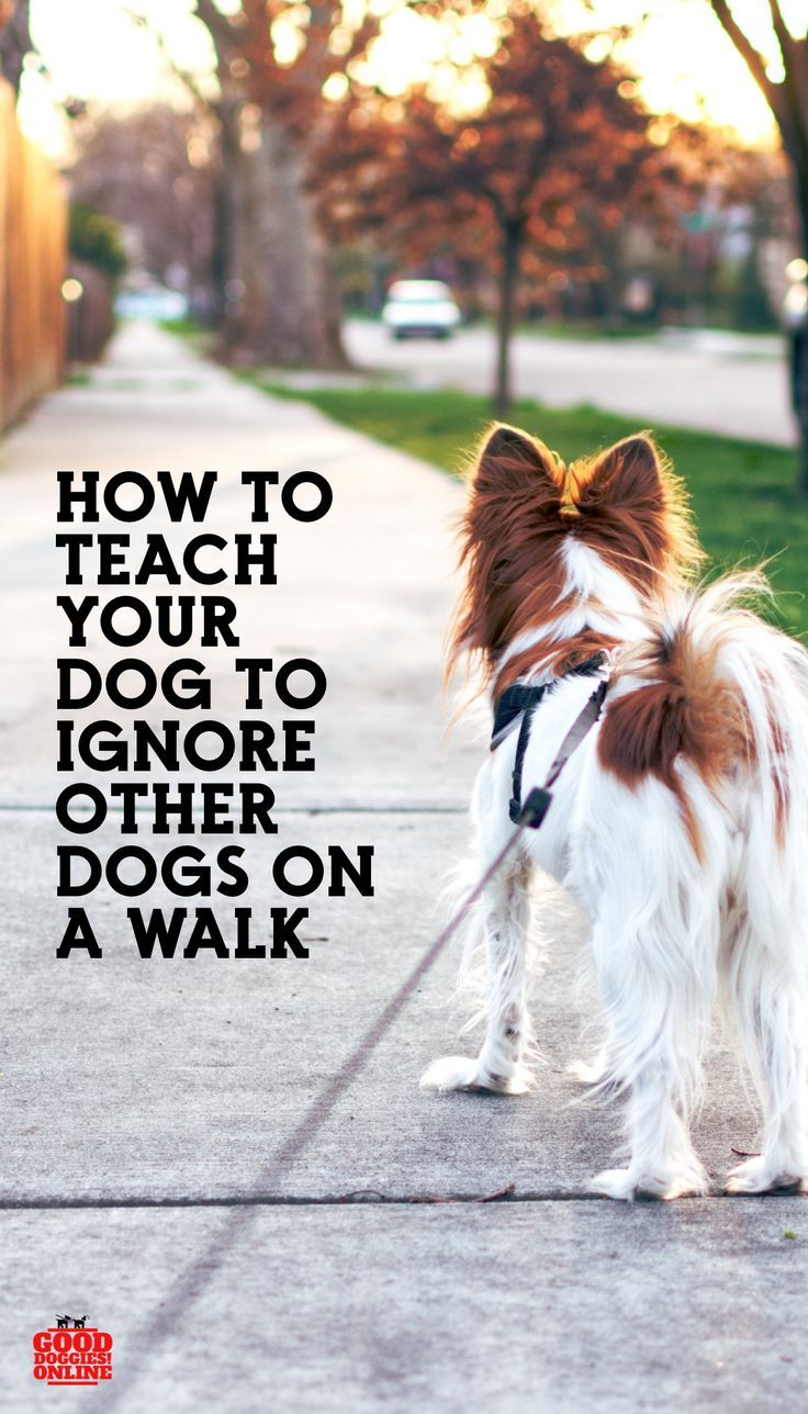 How To Teach Your Dog To Ignore Other Dogs On Walks Your Dog