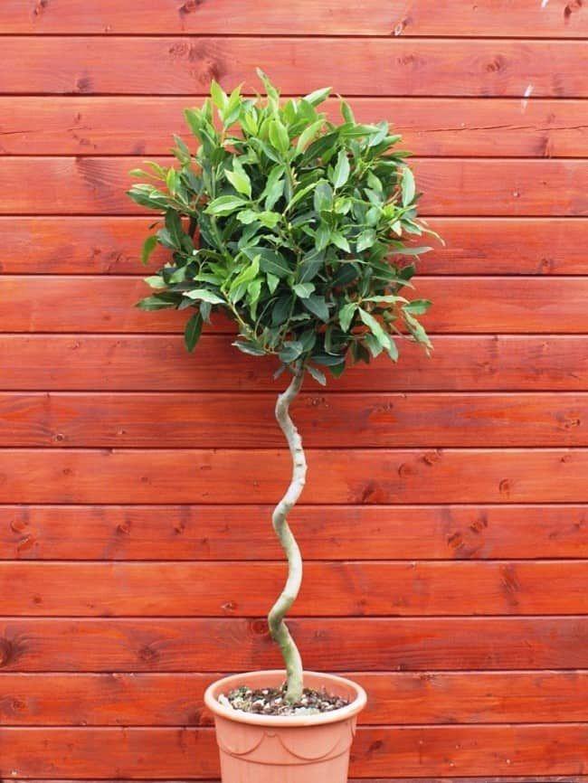 10 Roslin Ktore Warto Miec W Domu Bo Tworza Idealny Mikroklimat Dla Zdrowia Dompelenpomyslow Pl Plants Household Plants Trees To Plant