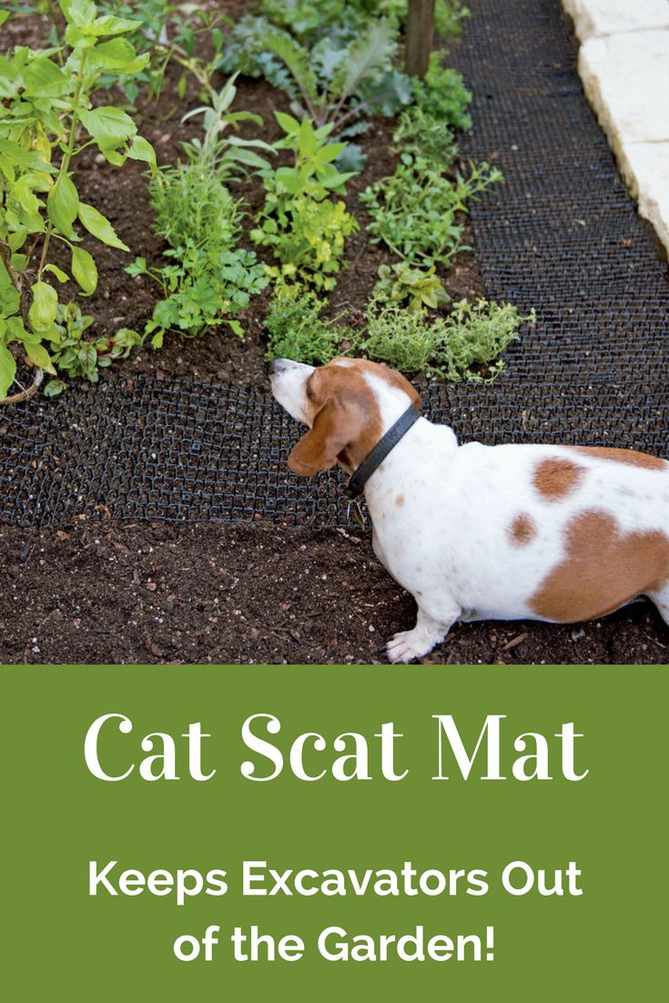 Boy, do I need this! The Cat Scat Mat keeps neighborhood cats from using the  garden or container plantings as a litter box. It has flexible plastic spikes so it's a  humane, chemical-free deterrent to cats, dogs or other small animals from digging in the garden - harmless, but effective. #ad #garden #gardening #pestcontrol #catdeterrent #catlitterbox #animalsdigging