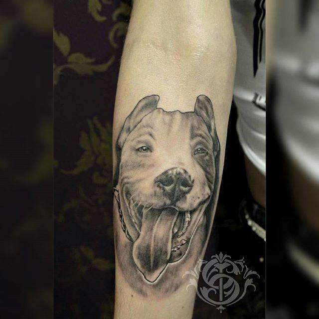 At @sacrotattoo  #dog #dogtattoo #dogportrait #portrait #portraittattoo #blackandgrey #blackandgreytattoo #bestrealistictattoo #relistictattoo #realistic #bestblackandgreytattoos #bestdogtattoo #tattooistartmag #inkjunkeyz #sacrotattoo #caromontoyatattoo #tatuadorescolombianos #supportgoodtattooers