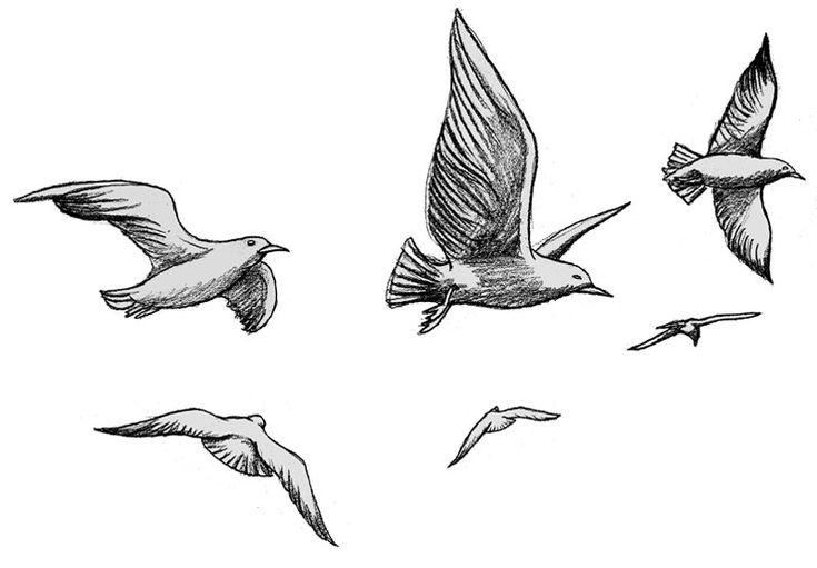 """Résultat de recherche d'images pour """"dessins oiseaux ..."""