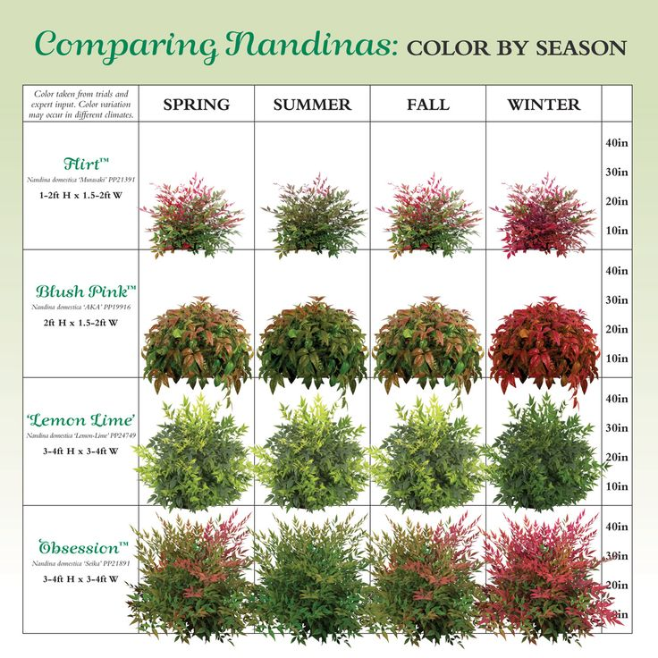 Zone 4 Landscaping Plans