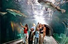 Adventure Aquarium Camden, NJ Shark tunnel.