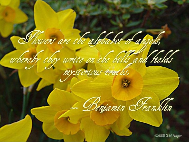 Flower Quotes Sayings Google Search