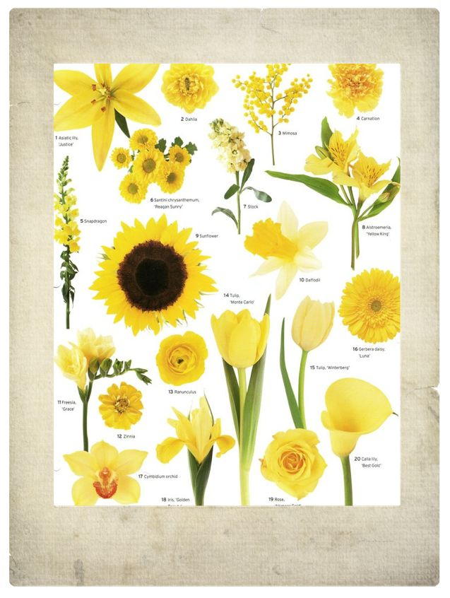 25 Best Ideas About Yellow Flowers Names On Pinterest