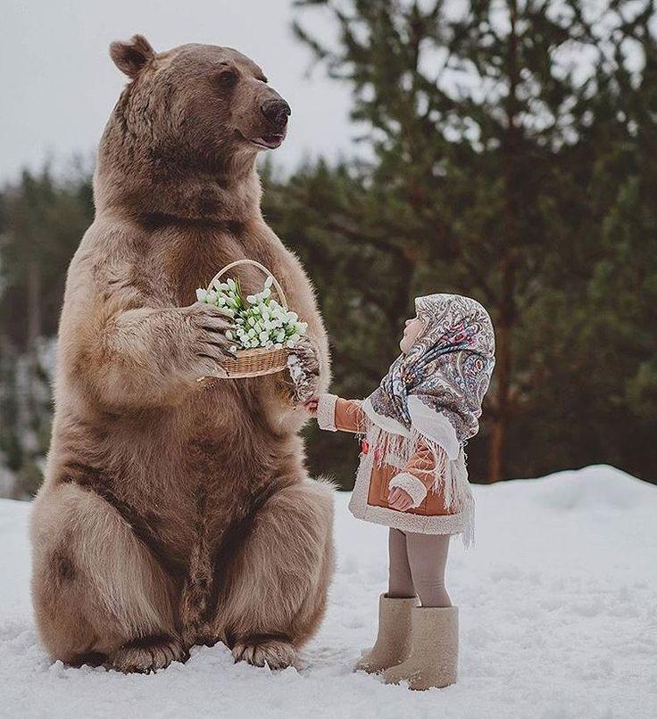 Зятю, прикольные картинки человека и медведя