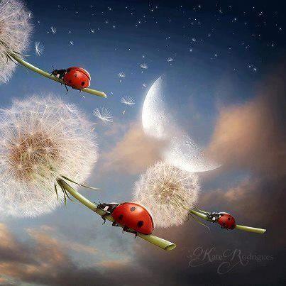 fantasy land ladybugs moons - photo #10