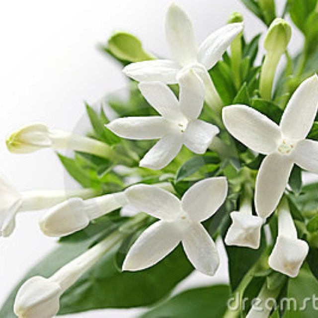 bouvardia white. I love these little white flowers. They are the perfect accent!