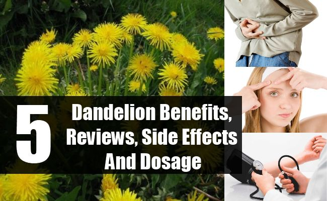 Dandelion Benefits, Reviews, Side Effects And Dosage