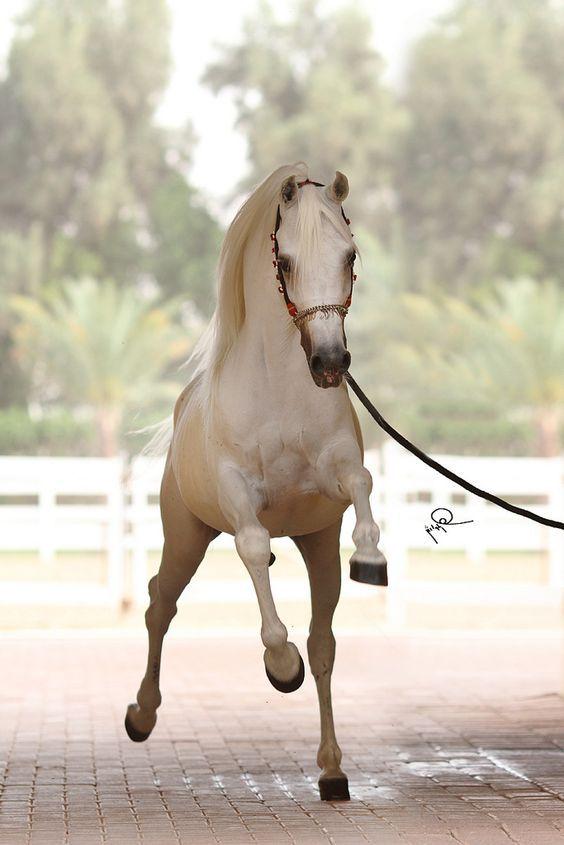 Arabian horse - Great capture!: