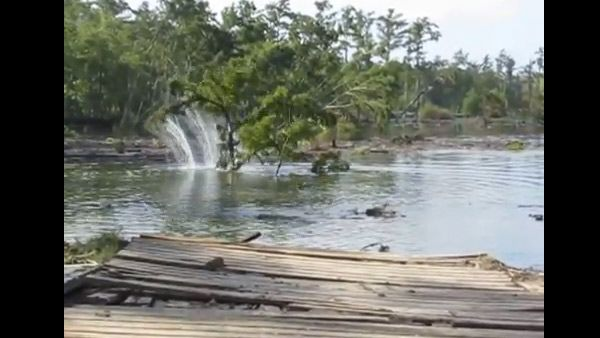 RAW VIDEO: Another tree falls victim to giant Louisiana sinkhole - 14 News, WFIE, Evansville, Henderson, Owensboro