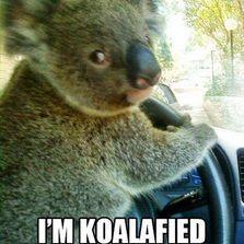 Koalafied to drive