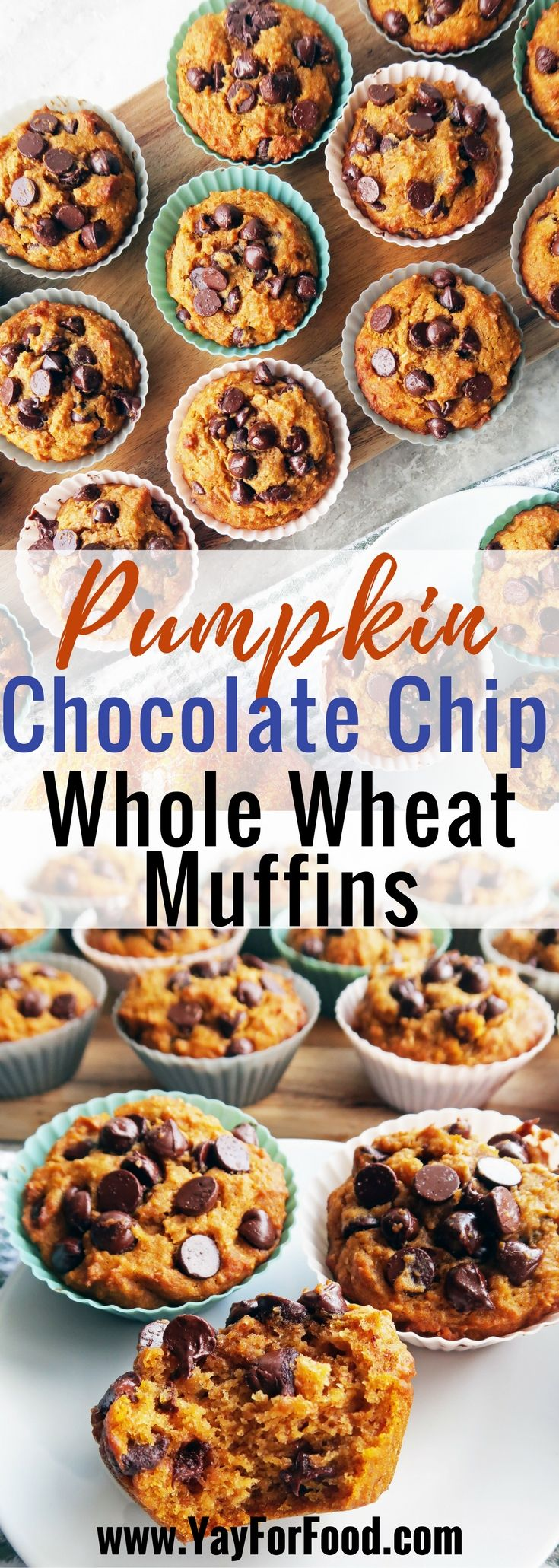 A tasty dessert that's perfect for fall! Delicious, soft, and full of chocolate chips, these pumpkin muffins are easy to make and ready in 30 minutes! desserts | snacks | sweets | vegetarian | fall recipes | pumpkin recipes | breakfast