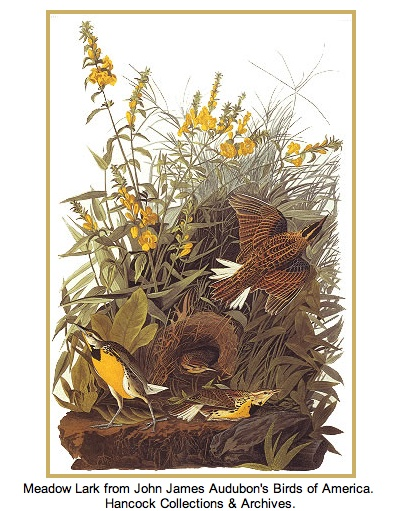 an introduction to the life of john james audubon Book review of john james audubon and the birds of america: a visionary  this is an excellent introduction to audubon's life and work, and.