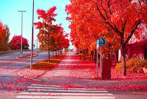 tumblr_lr4lo187po1qeidceo1_500_large: Red, Nature, Autumn, Stockholm Sweden, Color, Beautiful, Fall, Places, Photo