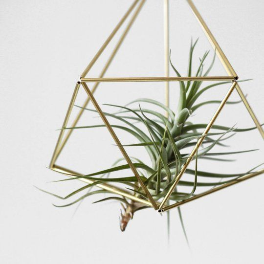 Buy or DIY: 5 Ideas for Displaying Tillandsia