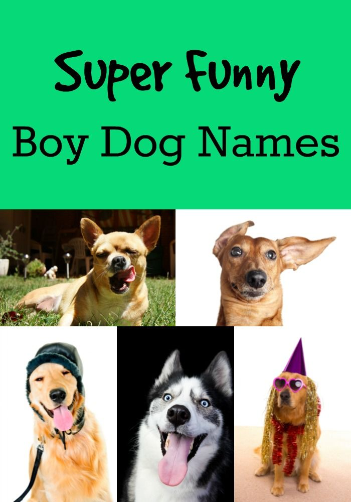 Hilarious, spirited and funny dog names you'll love