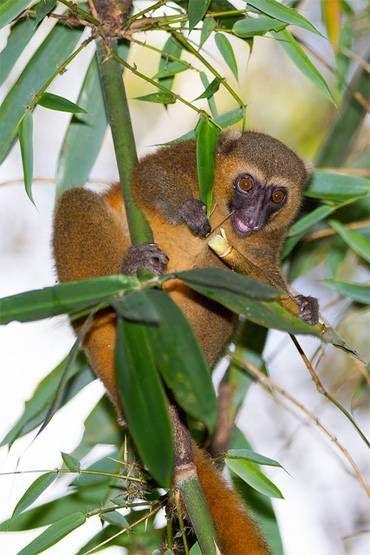 Самые редкие животные приматы в мире