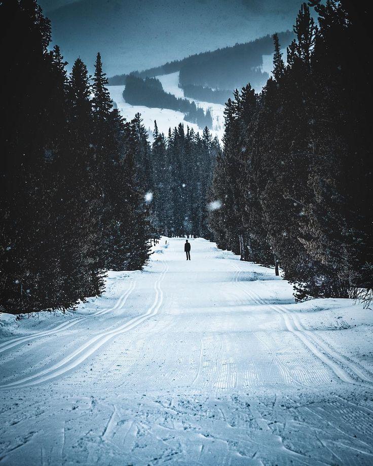@johnmoss3 Instagram #winter #trees #forest #snow #nature #white