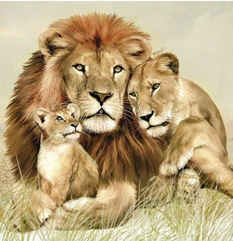 Pin By Shee Shee On Beautiful Lion Family Lion