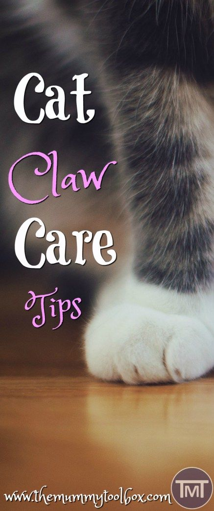 Who doesn't love a mani-pedi?? Make sure that you take care of your cat's claws with these claw care tips to avoid health complications in the future. #catcare #catclaws #cat #cats #CatWeek