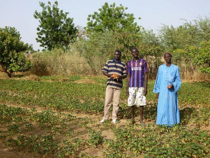 Jatropha farmers in Senegal