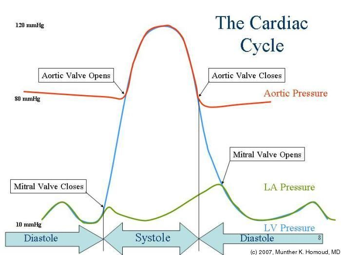 90 Best Cardiac Cycle Images On Pinterest