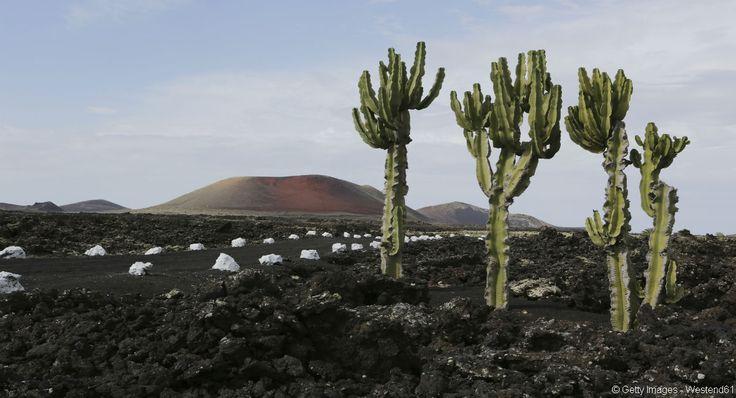 Les paysages volcaniques, typiques de Lanzarote.