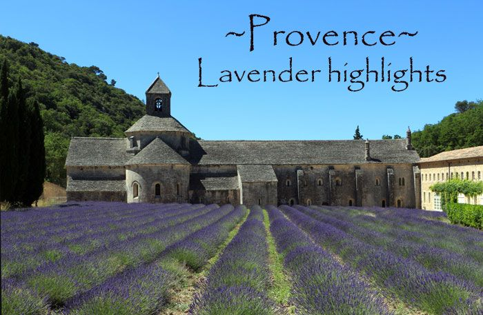 Lavender highlights in Provence, South France