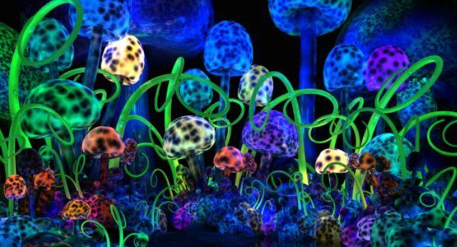 que pasa cuando comes hongos alucinogenos