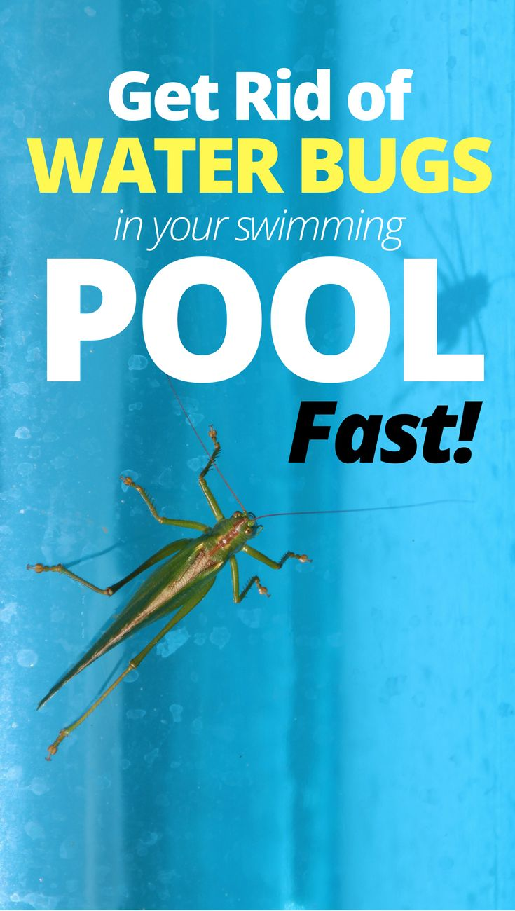 How To Get Rid Of Water Bugs In Your Pool | Pool care ...