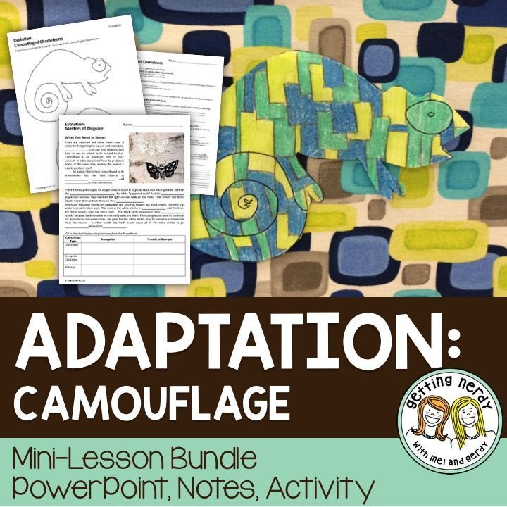 Students learn about camouflaging coloration in organisms and how this type of adaptation can lead to survival and success in reproduction. Students explore the role of the Industrial Revolution in the evolution of the Peppered Moth, observe the different types of camouflage in action, and then demonstrate understanding of three types of camouflage as they try to conceal their own camouflaged chameleon in your classroom.