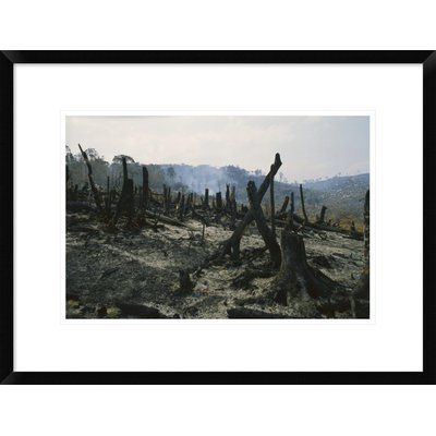 Global Gallery 'Slash and Burn Agriculture, Where Forest is Burned to Create Agricultural Land, Madagascar' Framed Photographic Print Size: