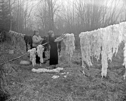 Cowichan wool being hung to dry, between 1941 and 1943.  (All the wool used in the sweaters is self-coloured, that is, the wool comes  from white, brown, grey and black sheep, and no dyes are used - Don )
