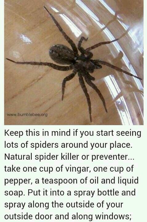 DIY spider spray...I don't do spiders ewww