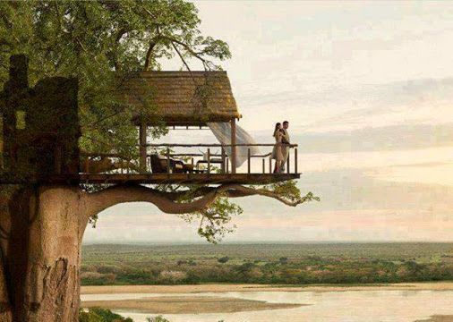 Best Tree Houses Images On Pinterest Treehouses Architecture - Beautiful tree house designs