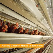 Tianrui Design Hot Dip Galvanized Steel Made Automatic Layer Poultry Cages for Sale