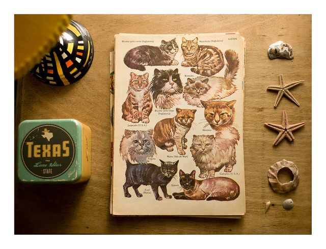Diccionario de gatos ilustrado ♥ | Flickr: Intercambio de fotos