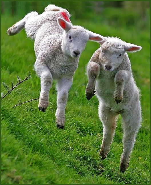 Pull on your wellies and go pishing: THE BUMPER BOOK OF ...  |Baby Lambs In Spring