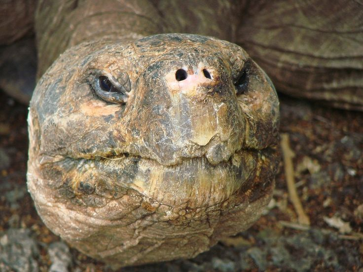 Wildlife Galapagos Tortoise, Galapagos Sea Star Cruise - Ecuador
