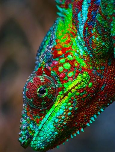 Beautiful (even if I don't like reptiles)